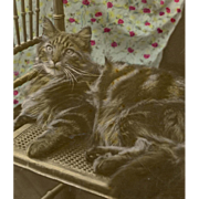 Antique Real Photo Postcard of Gray Tabby Cat Colorized by Hand 1910