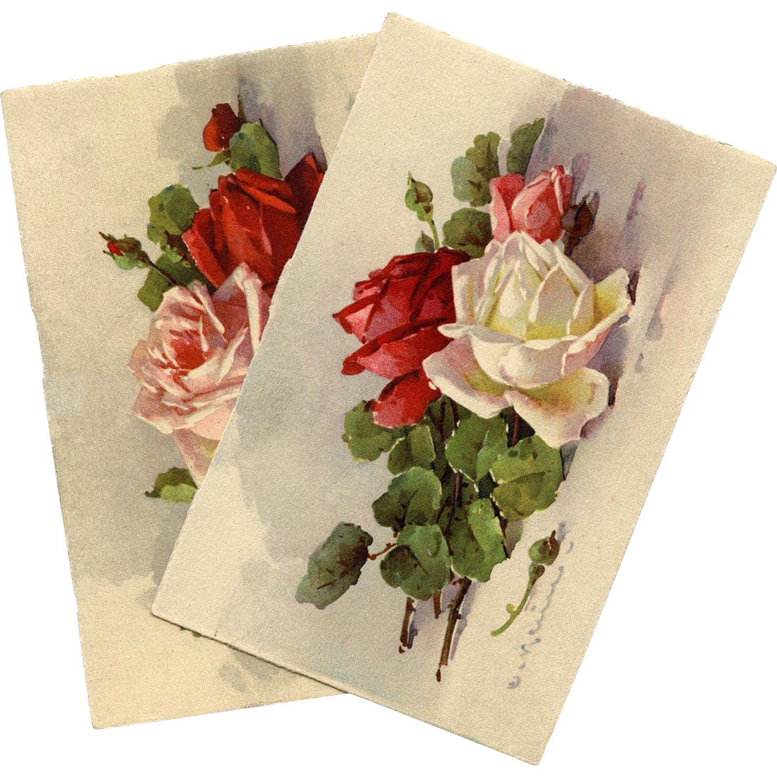 2 Catherina Klein Roses Postcards Unused