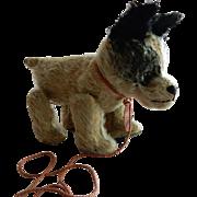 CUTE c.1912 Barvaria D.R.G.M. Trippel Trappel Walking Dog
