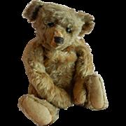 "GREAT 13"" Well Loved Steiff Teddy Bear C. 1915"