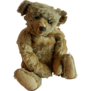 "GREAT 13"" Well Loved Steiff Teddy Bear C. 1915"