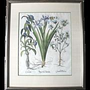 "Original Hand-Colored Copper Plate "" Cruciata Spatula Foetida"" Botanical Engraving c1613 by Besler"