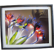 Alstroemeria Floral 1999 Signed Limited Edition Framed Print by Robert Buelteman
