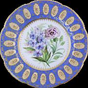"Beautiful Antique c1830-40 English Hand Painted Botanical Porcelain Plate Ridgway 9 3/8"""