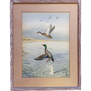 Boris Riab (Russian/American 1898-1975) Ducks in Flight Watercolor Wildlife Hunt Scene