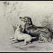 Landseer Antique Print Steel Engraving Dog Dogs Cat Spaniel Terrier