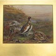 Gouache of Scottish Game Birds Ptarmigan by Much Listed English Artist Cuthbert Edmund Swan
