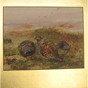 Gouache of Game Birds Partridges by much listed English Artist Cuthbert Edmund Swan