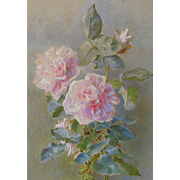 Antique English Watercolour Watercolor of Roses Rose Pink Still Life Study