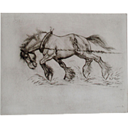 Shire Horse Etching by Well Listed Artist Anton Lock  SIGNED