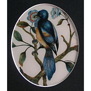 Antique Reverse Painting on Glass of A Song Bird English c1870