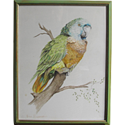 Green Parrot John Baxendale  1919-1982 English Bird Watercolor Watercolour