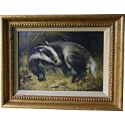 Study of a Badger Oil on Board John Edwards RP (1940-  )
