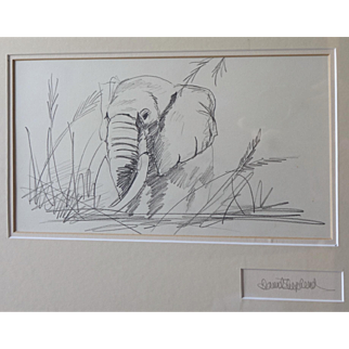 David Shepherd Study of an African Elephant - Pencil - Graphite 1991