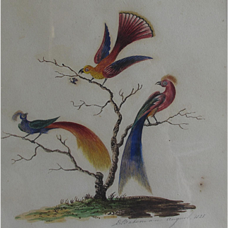 Georgian English Antique Watercolour of Birds of Paradise 1825  Batemann
