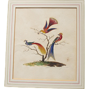 Antique English Watercolour Painting of Birds of Paradise Georgian 1825 by E Bateman Watercolor