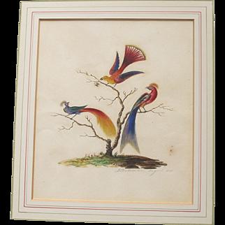Antique English Watercolour Painting of Birds of Paradise Georgian 1825 by E Bateman Watercolor