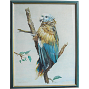 Blue Parrot by John Baxendale (1919-1982) Watercolour Watercolor Painting Bird