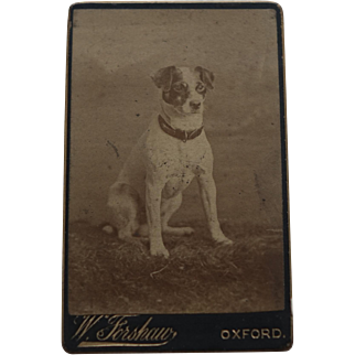 CDV Photo Antique of a Jack Russell Dog