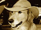 Happy Hound Antiques & Collectibles logo