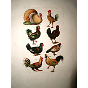 French Rooster Engraving Hand Colored 19th C