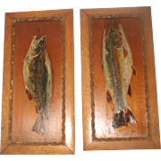 Fish Oil Paintings On Wood Pair England C.1870-90 Signed