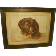 St. Bernard Watercolor Framed England 19th Century