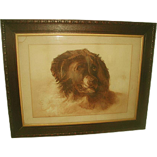 Framed English Watercolor 19th Century St. Bernard Portrait