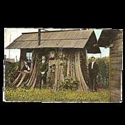 "Postcard of ""Cedar Stumps Puget Sound Wash"""