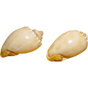 Sea Shell Salt and Pepper Shakers - b213