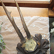 German Roe Deer Trophy Mount Black with Forest Carved Plaque
