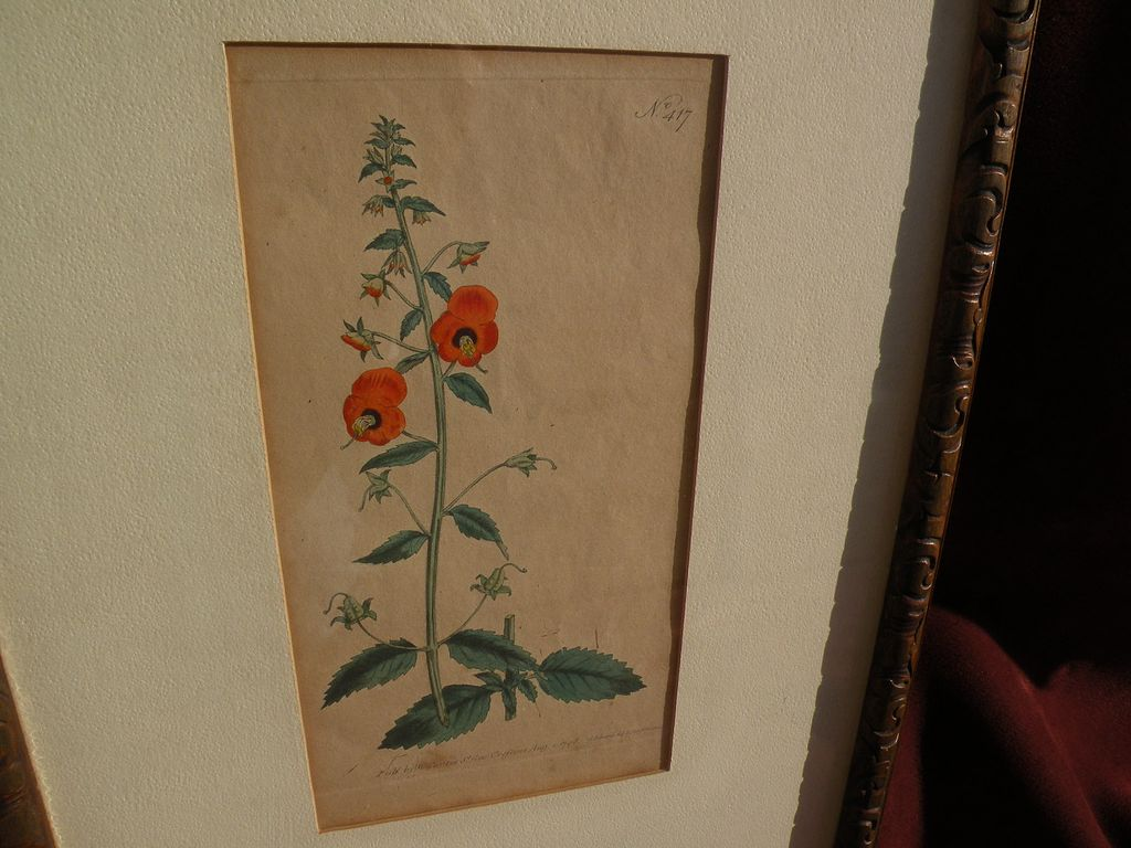 English 18th century hand colored botanical etching print dated 1798