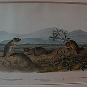 JOHN JAMES AUDUBON (1785-1851) original large folio lithograph print by the American naturalist and ornithologist