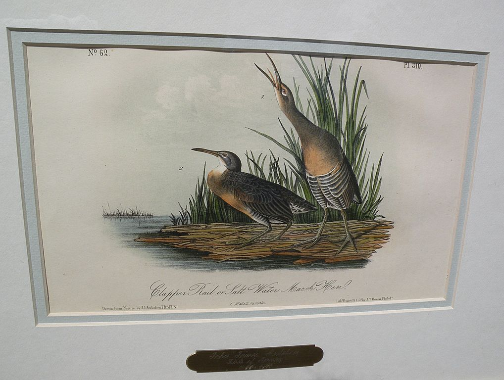 "JOHN J. AUDUBON hand colored 19th century lithograph print ""Clapper Rail or Salt Water Marsh Hen"""