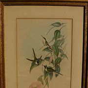 JOHN GOULD (1804-1881) hand colored lithograph print of hummingbirds by noted ornithologist illustrator artist