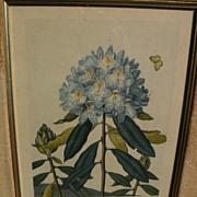 "DOCTOR ROBERT JOHN THORNTON rare 1812 botanical print ""Pontic Rhododendron"" quarto edition"