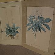 PIERRE-JOSEPH REDOUTE (1759-1840) botanical  art **PAIR** of hand colored stipple engraving prints