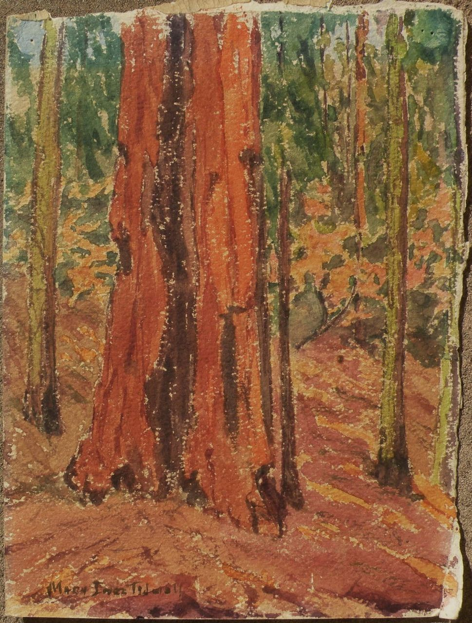 Circa 1935 watercolor painting of trunk of large forest tree signed Mary Inez Tidwell