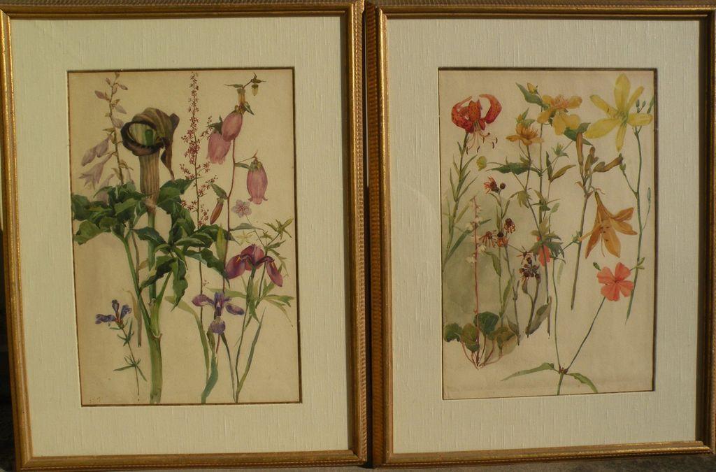 Original botanical art PAIR watercolor paintings of flowers dating to 1907