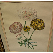 Old 19th century hand-colored botanical print in distressed gold frame