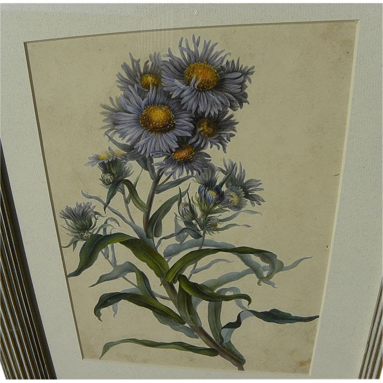 Botanical art amazingly detailed original watercolor painting of wildflowers