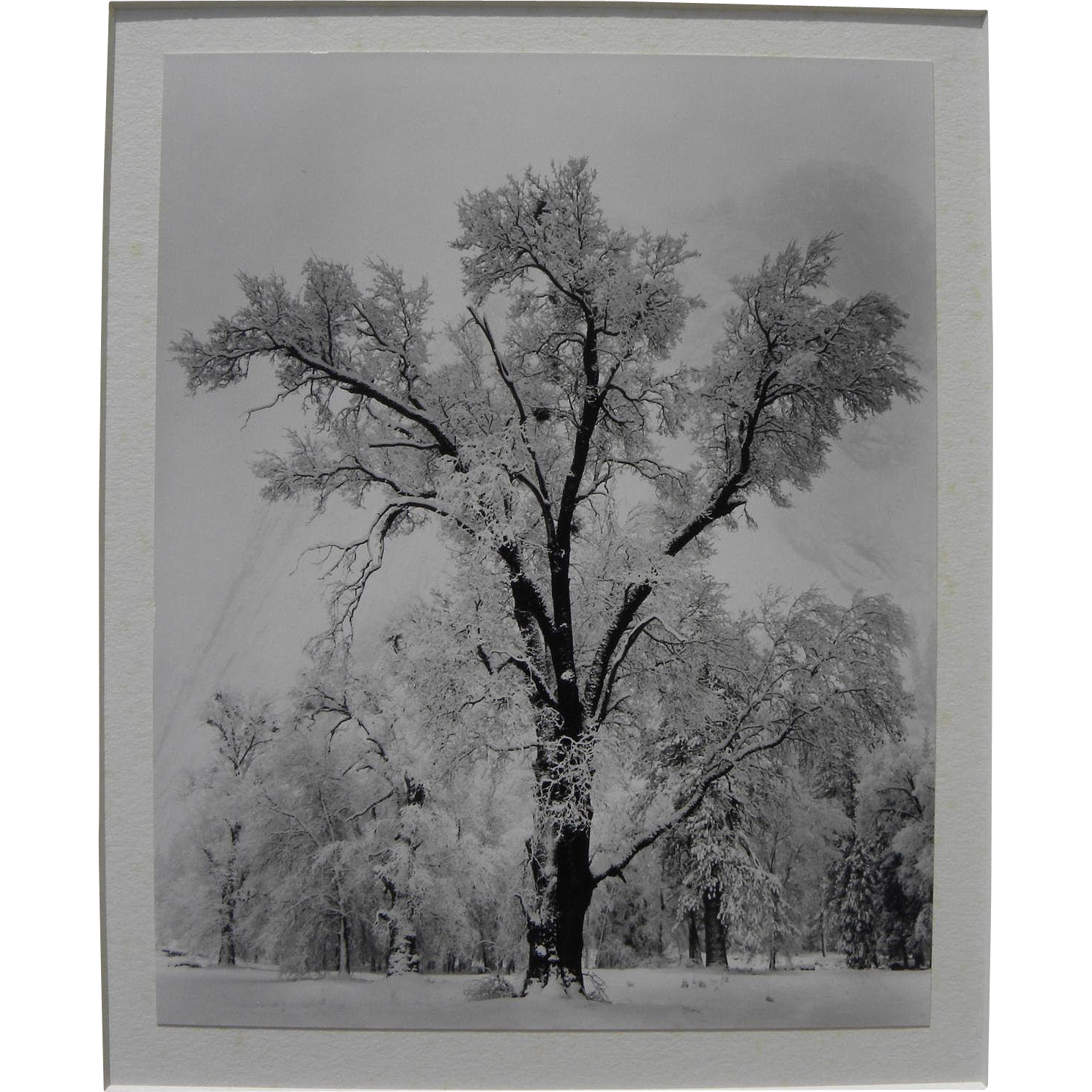"ANSEL ADAMS (1902-1984) Special Edition Yosemite photo ""Oak Tree, Snowstorm"" printed by Alan Ross from original negative"