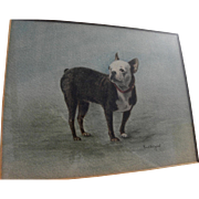 Dog art signed watercolor painting of a Boston Terrier or French Bulldog circa 1900