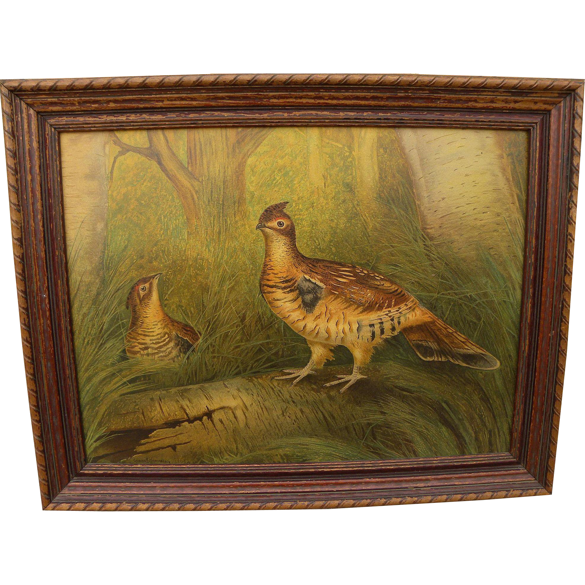 After GERARD RUTGERS HARDENBERGH (1855-1915) chromolithograph print of two game birds excellent condition