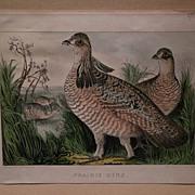 CURRIER & IVES scarce small folio antique American lithograph print Prairie Hens