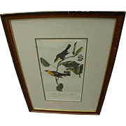 "JOHN J. AUDUBON (1785-1851) hand colored lithograph in octavo size ""Saffron-headed Marsh Blackbird"" by the famed ornithologist and naturalist artist"