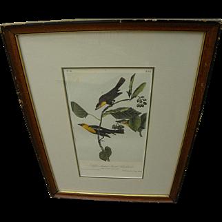 "JOHN J. AUDUBON (1785-1851) hand colored lithograph in octavo size ""Saffron-headed Marsh Blackbird"" by the famed ornithologist and naturalist artist"