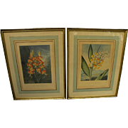DOCTOR ROBERT JOHN THORNTON **pair** fine botanical prints quarto edition circa 1812