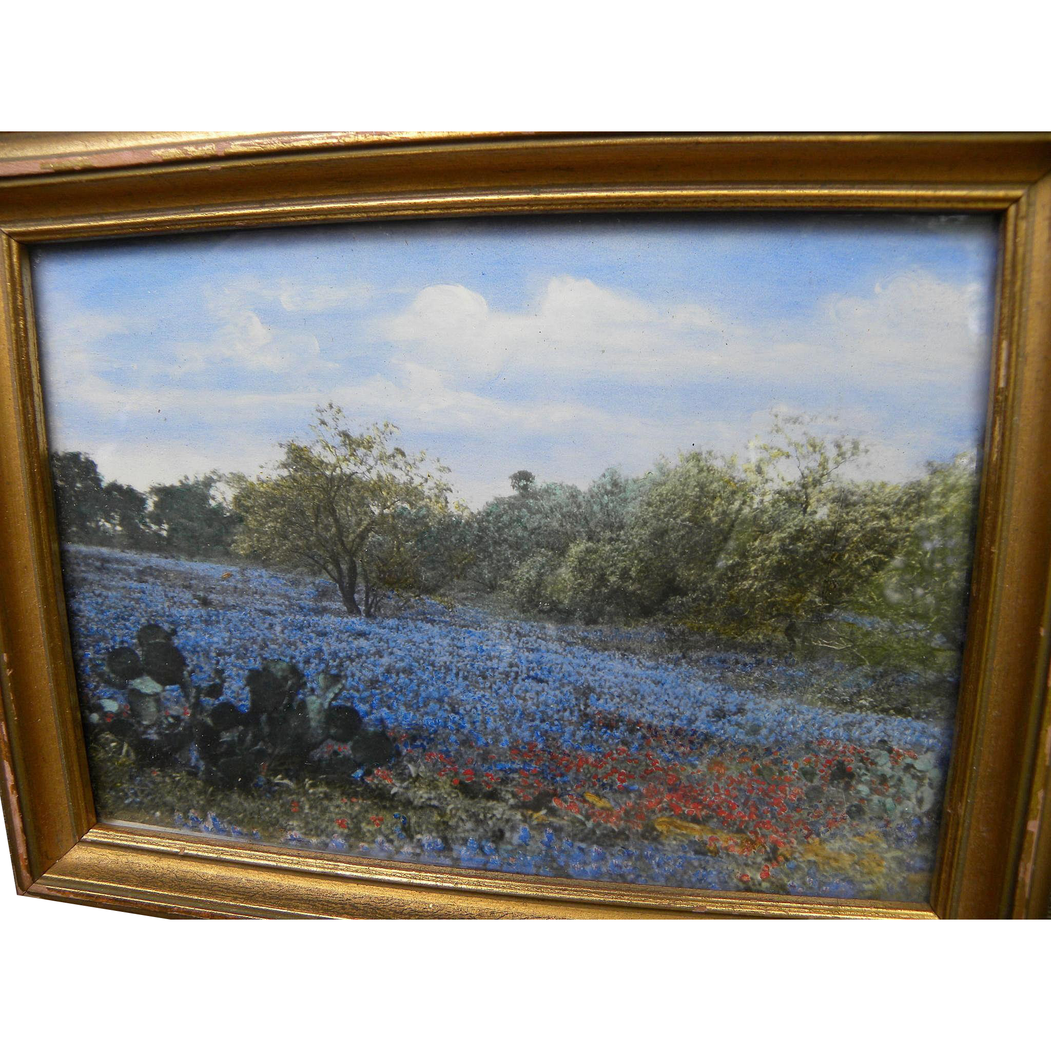 Texas Bluebonnet Landscape Hand Colored Vintage Photograph Jon Berg Fine Arts And More Ruby Lane