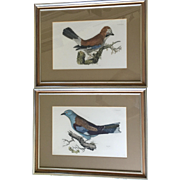 OnSale: British Bird prints: similar to Audubon: Prideaux John Selby: 1788-1867: 2 framed prints: Roller and Jay: plates 36 and 34